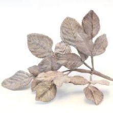 Vintage Grey Velvet Rose Leaves